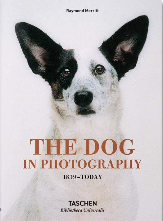Dog in Photography 1839-Today